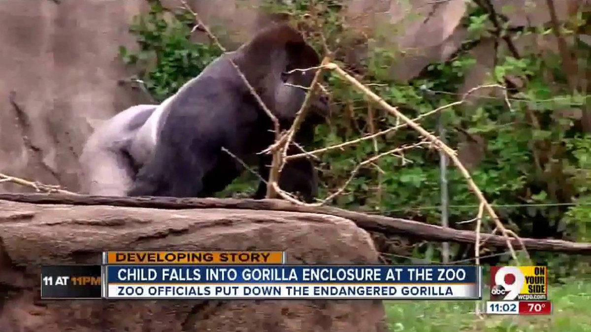 harambe is just the latest attraction at the petting zoo of internet