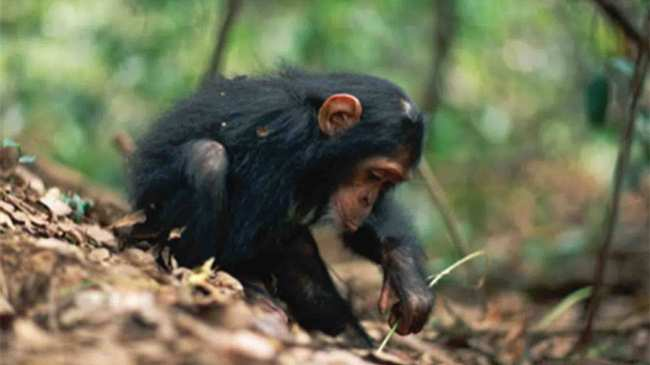 Un mono le muestra una hoja a otro mono - i-D