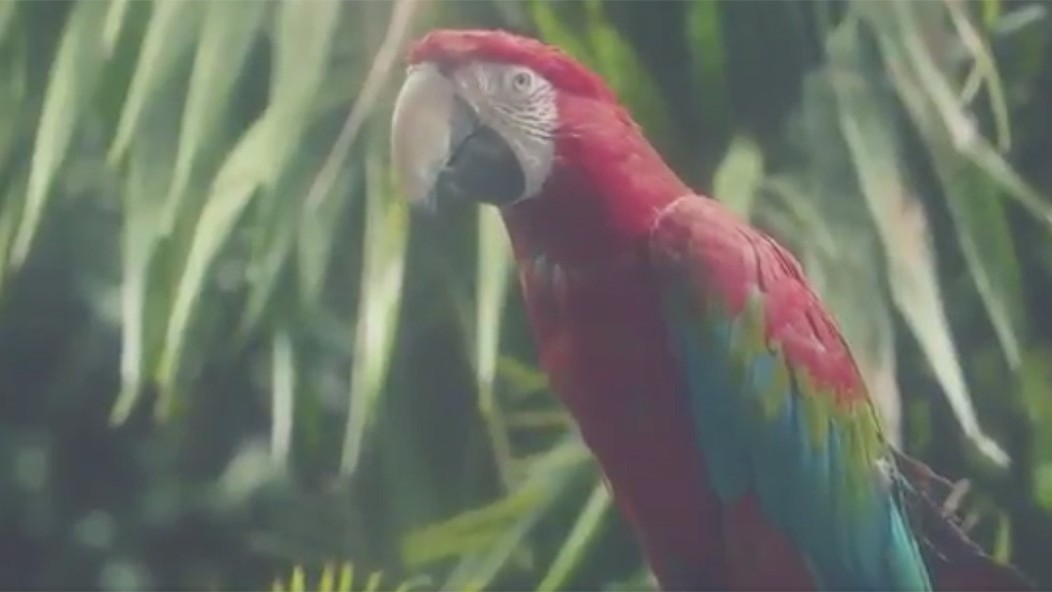 this parrot will tease you hits from calvin harris' upcoming album